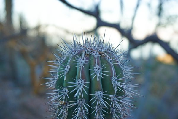 An up close photo of a cactus in Baja Mexico.
