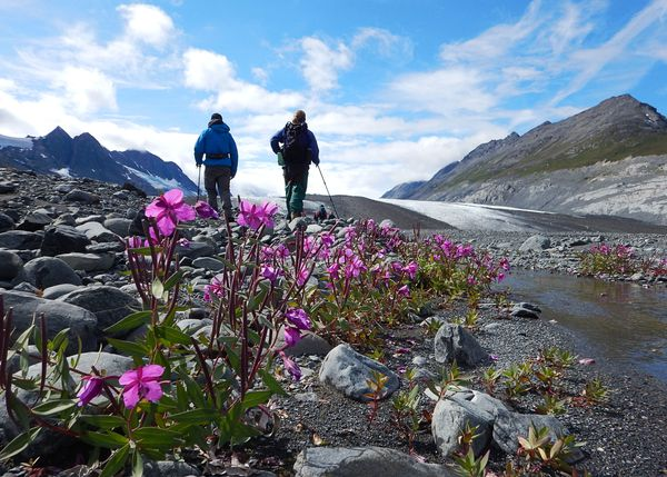 Backpackers hike up a rocky slope dotted with wildflowers in Alaska's Chugach Range.